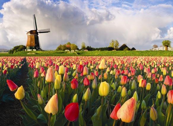 Tahukah Anda: Bunga Tulip, Warisan Kekhilafahan Islam Turki Ustmani