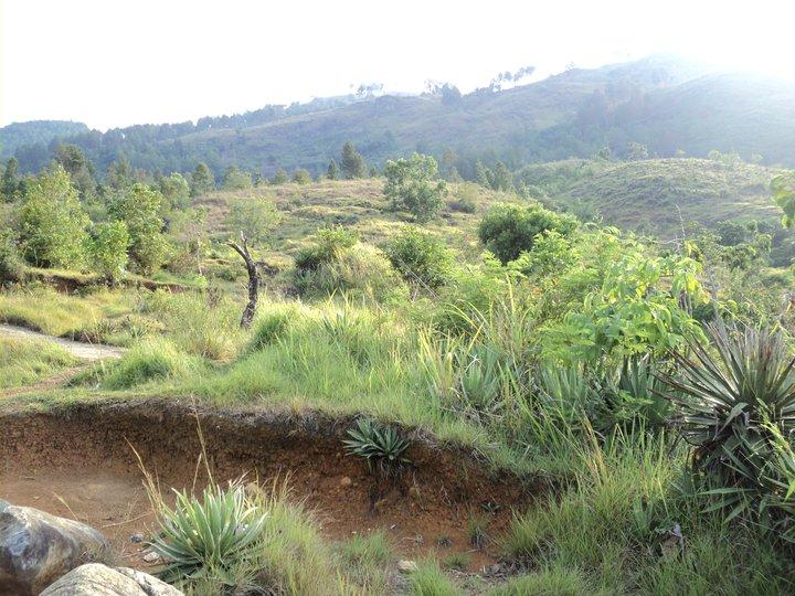 Melangkah dari perbukitan di sesudut alam, menuju makam pahlwan di perantauan