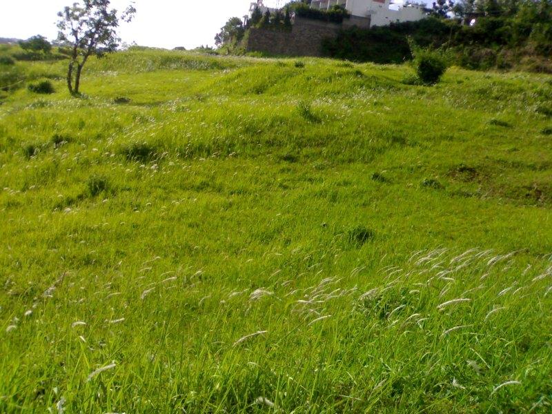 Ilalang dari bukit Awi Ligar; Bandung