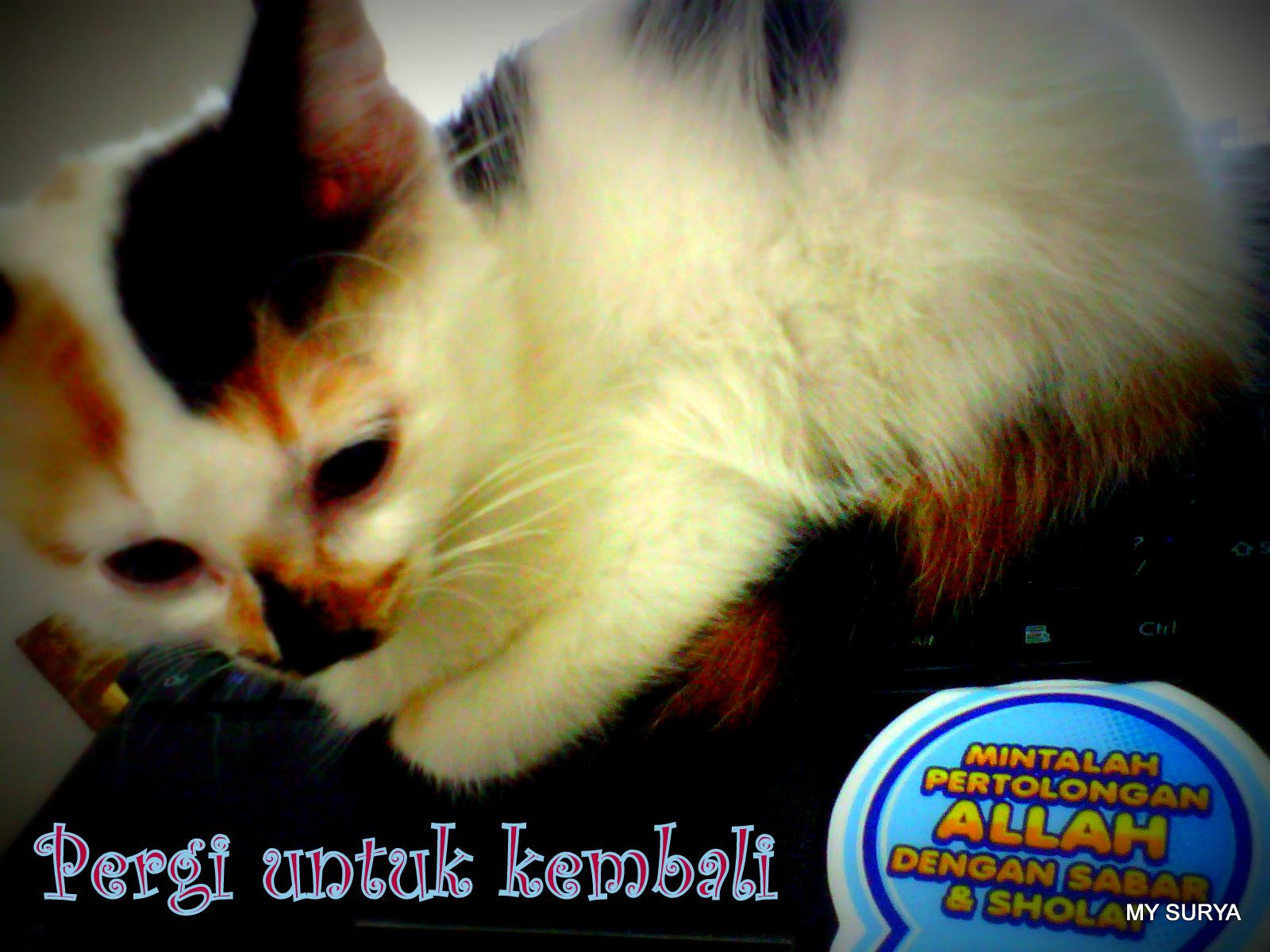 Kucing MY SURYA